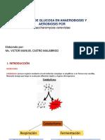 Consumo de Glucosa en Anaerobiosis y Aerobiosis