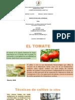 PROPAGACIÓN in vitro EN EL CULTIVO DE TOMATE RICHARD.pptx