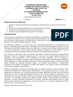 Informe 6 Levaduras y Hongos Multicelulares