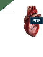 Manual_Toma_e_interpretacion_de_electrocardiograma