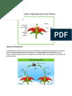 La Polinización y Reproducción de las Plantas