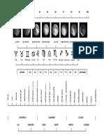 Tabela biodinâmica
