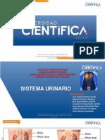 10 Urinario - 2020-I (1) (1)