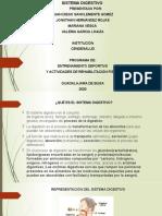 TRABAJO SISTEMA DIGESTIVO(1)
