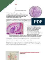 Dezvoltarea dintilor faza I si II. Histogeneza tesuturilor dentare..docx