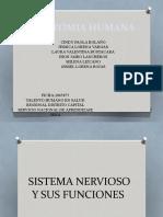 ANATOMIA HUMANA 1.pptx