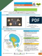 Prog Crecer - Sesion 2 - Como funciona mi cerebro bajo estres_rev1