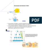 Diferenciación de linfocitos T CD4+