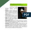 Picolezna (Pygarrhichas albogularis)