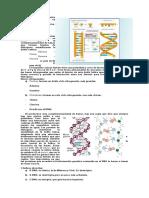 biocel prueba3.1.docx