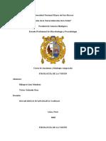 CUESTIONARIO FISIOLOGÍA DE LA VISIÓN