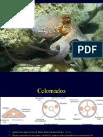 10Phylum Mollusca-1.ppt