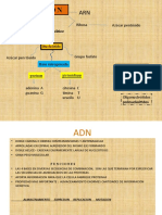 Presentación 3 ADN estructura 19(1)
