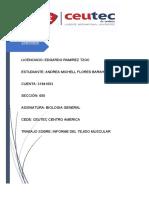 informe del tejido muscular Andrea Flores