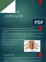 NERVIOS ESPINALES.pptx