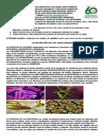 GUIA 2 DE BIOLOGIA DEL TERCER PERIODO GRADO 6 JM-1