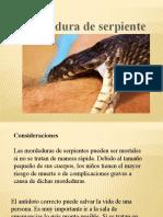Presentación PICADURA DE SERPIENTES