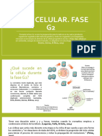 Ciclo Celular. Fase G2