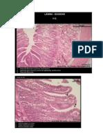 Laminas Biocelular e Embriologia