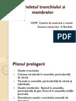 Scheletul trunchiului si membrelor (2019)