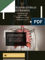 Vias respiratorias superiores
