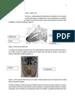 anatomía del sisitema digestivo
