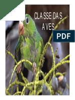 01-Classe das Aves
