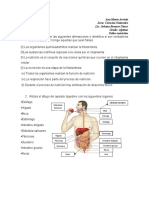 taller sistema digestivo humano