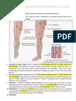 ENFERMEDAD ARTERIAL Y VENOSA MI - Dr. Herrera  (1)