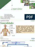 Copia de SISTEMA NERVIOSO y piel.pptx