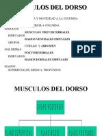 MUSCULOS DEL DORSO