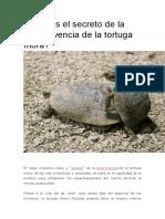 Cuál es el secreto de la supervivencia de la tortuga mora