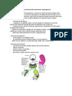 Organogenesis.docx