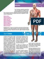 EL CUERPO HUMANO 2.pdf