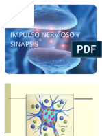 Impulso+nervioso+y+Sinapsis
