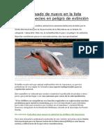El delfín rosado de nuevo en la lista roja de especies en peligro de extinción.pdf