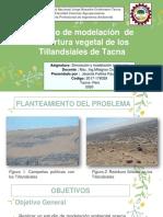 Simulación Tillandsiales.pdf