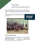 Infiintarea unei ferme de gaini.doc