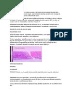 paratiroides y glandula suprarrenal