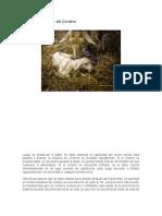 Cuidados del cordero recien nacido. (1)