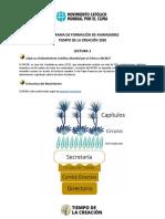 Movimiento Católico Mundial por el Clima.pdf