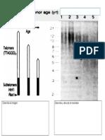 Actividad 2 Virtual BUAP General Genetica 274 Ejercicio Telomeros(1)