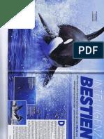 Killer Wale Inteligenzbieste TV klar