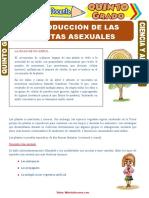 Reproducción-de-las-Plantas-Asexuales-para-Quinto-Grado-de-Primaria