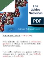4.Acidos nucleicos