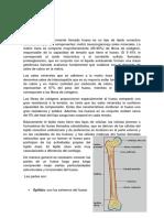 87- 127 fisiologia