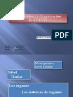 6. Niveles de Organización
