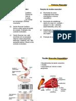 Arquivo_15_-_Fisiologia_muscular[1]