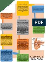 MAPAS CONCEPTUAL DE PANCREAS.docx