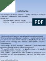 bolta palatina, fosa zigomatica, infratemporala, pterigomaxilara, orbita